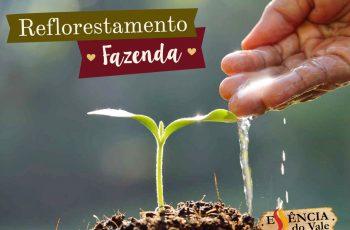 Reflorestamento da Fazenda Bela Vista